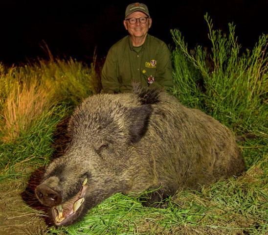 Wild boar & puma