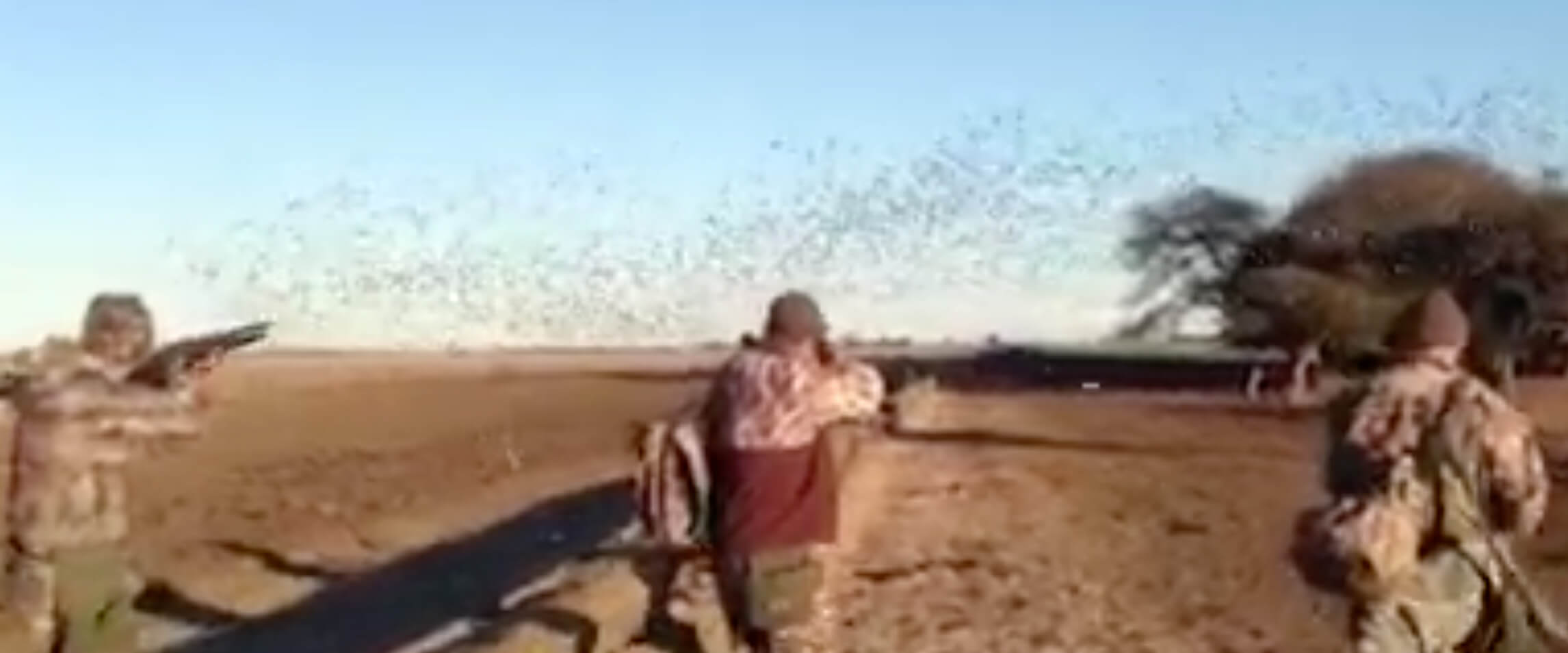 3 Cajuns vs 30.000 Doves